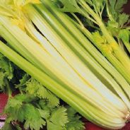 Celery Golden Self Blanching - 5 grams - Bulk Discounts available